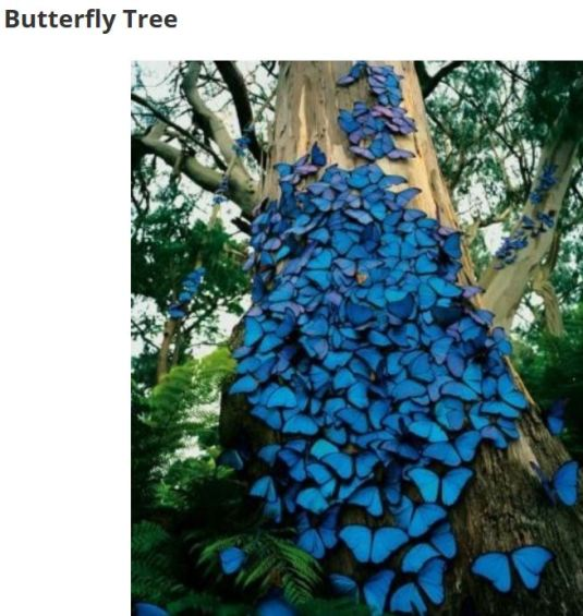 Amazing Butterfly tree.....